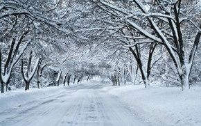 冬天, 道路, 雪, 森林