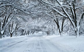 inverno, stradale, nevicata, foresta