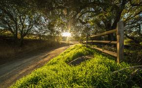 дорога, лучи, солнце, Калифорния, забор, США, деревья