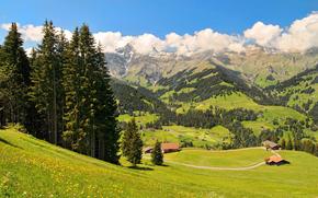 domestico, valle, Fiori, cielo, nuvole, erba, abete rosso, alberi, foresta, Montagne, natura