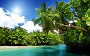 Palms, sun, tropics, ocean, sea