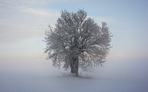 hiver, arbre, neige, froid, BRANCH