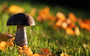 follaje, bosque, hierba, seta, otoño