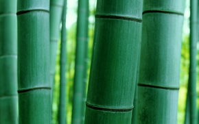 naturaleza, BARRIL, Macro, bambú