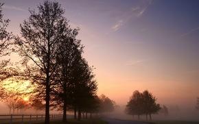 morning, road, landscape, fog