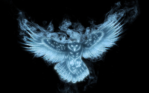 view, wings, black background, owl
