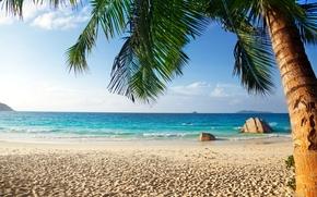 sand, Palms, shore, sea, beach, tropics