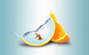 water, goldfish, orange