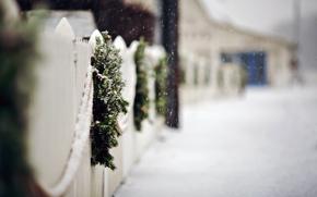 steccato, FILIALE, Corone, abete rosso, stradale, steccato, Fiocchi di neve, nevicata, inverno