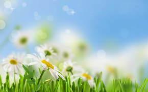 cielo, follaje, Manzanilla, mancha, frescura, rocío, belleza, verde, Flores, gotas, Blanco, PRIMAVERA, hierba