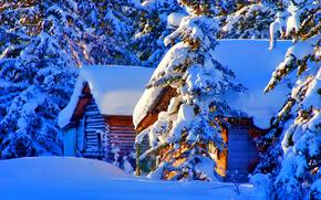 natura, foto, inverno, nevicata, abete rosso, domestico