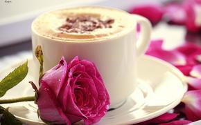 чашка, капучино, цветок, кружка, розовая, роза