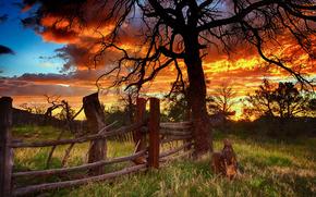 дерево, забор, закат