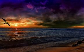 tramonto, onde, Andalusia, dopo la tempesta, lavorazione, gabbiano