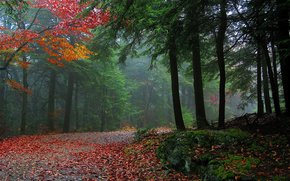autumn, forest, road, trees, nature