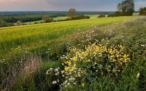 campo, impianto, erba, natura