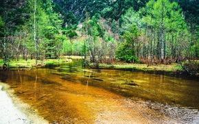 лес, деревья, озеро, пейзаж
