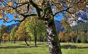 Montagne, alberi, campo, paesaggio