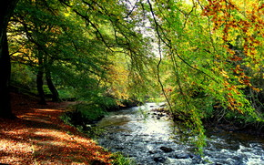 torrente, foresta, puntellare, autunno, alberi, fogliame
