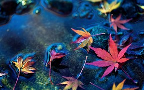 обои, широкоэкранные, макро, листик, широкоформатные, полноэкранные, фон, листья, камни, вода, листочек