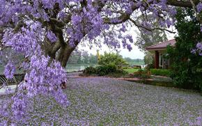 дерево, домик, пруд, природа, весна, фото