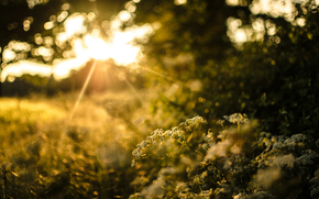 plants, greens, sunset, evening, blur, sun, nature, light, bokeh, grass, trees, bush