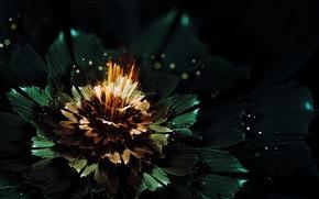 bokeh, fiore, brillare, chiaro, bagliore, grafica, Raggi, astrazione