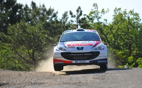 hood, Peugeot, Peugeot, white, Rally, Front