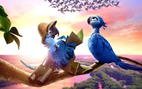 BINOCOLO, Cartone animato, animato, pappagallo, panorama, uccelli, grafica