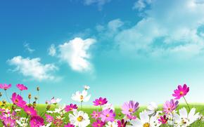 розовые, свежесть, луг, красота, весна, белые, ромашки, зелёные, листья, цветы, трава, небо, облака