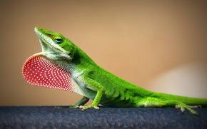 nature, lizard, background