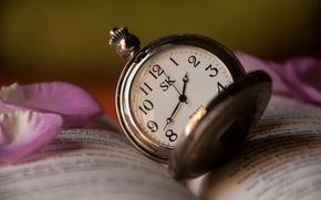 лепестки, текст, книга, время, розовые, часы, роза