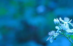 Direction, Fleurs, floraison, EUDB, SPRING