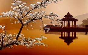 Paesaggi orientali, casa sull'acqua, Sakura