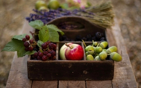 acorns, BERRY, basket, autumn, table, fruit, apples, lavender, blackberry
