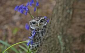 owl, owlet, tree, looks