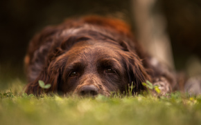 dog, friend, sorrow, view