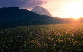 krajobraz, pole, rano