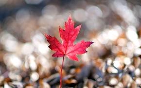 листик, размытие, макро, широкоэкранные, листочек, обои, красный, широкоформатные, фон, боке, форма, полноэкранные, розовый