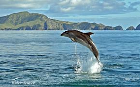 delfino, mare, acqua, spruzzo