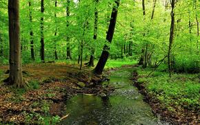 森林, 树, 潆, 性质