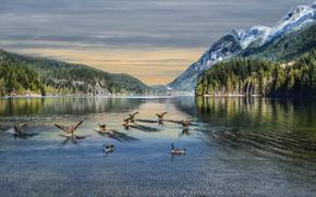 Buntzen Lago, Canadá, Montanhas, lago, paisagem