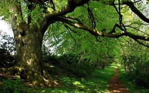 foresta, parco, alberi, stradale, natura