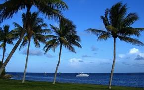 катер, побережье, тропики, Атлантический океан, Майами, пальмы, Флорида