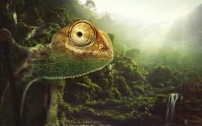 природа, животное, хамелеон