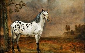 холст, масло, Паулюс Поттер, «Пятнистый конь», картина, нидерландский художник