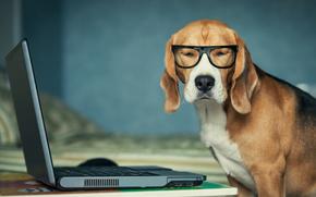 perro, cuaderno, gafas