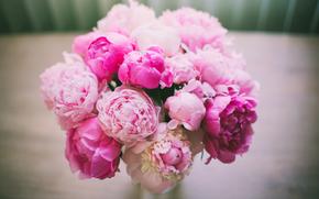 bouquet, Flowers, Peonies, Petals, pink