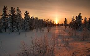 abete rosso, natura, nevicata, paesaggio, inverno, DAWN, bellezza