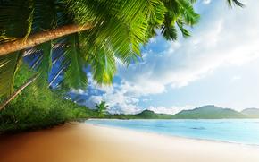 パームス, 熱帯, 空, 砂, 海, 太陽, 海, 岸, ビーチ